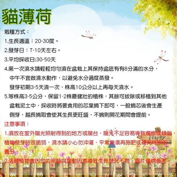 iPlant 積木小農場 - 貓薄荷 貓草 香草盆栽 台中花博紀念品【心安購物】