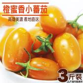 橙蜜香小蕃茄 3斤X1盒  高雄美濃  超人氣特產 箱購免運