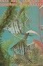 二手書R2YBe《Cureand recognize aquarium fish