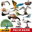 仿真動物模型套裝玩具飛禽鳥類老鷹鸚鵡鸮【3C玩家】