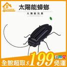 ✤宜家✤太陽能蟑螂 太陽能玩具 啟發思考 免組裝