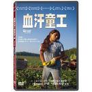 血汗童工DVD 聖安東尼奧電影節最佳觀眾票選獎