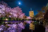 【拼圖總動員 PUZZLE STORY】KAGAYA-五重塔和櫻花 日本進口拼圖/Yanoman/1000P/夜光