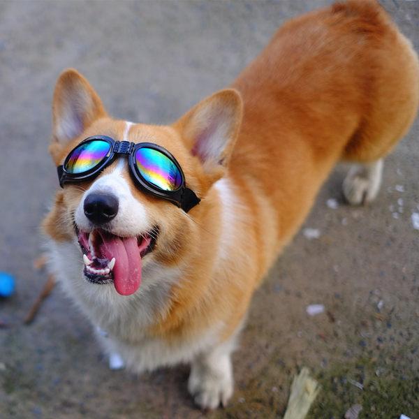 兔八哥柯基墨鏡狗狗太陽鏡防風沙