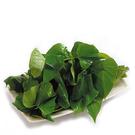 鮮嫩地瓜葉★安全蔬菜