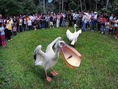[新竹]綠世界休閒農場-精緻單人田園美食一日遊