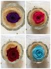 永生花花材,精品2-3玫瑰,新色上架,單...