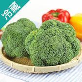 【美國】鮮綠青花菜1粒(180g±5%/粒)【愛買冷藏】