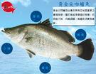 【賣魚的家】黃金尖吻鱸魚片(200-30...