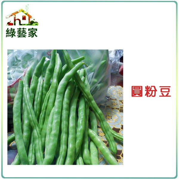 【綠藝家】E06.圓粉豆(壞豆)種子60顆