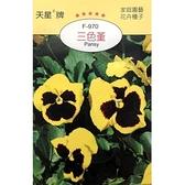 花田綠地種子-三色堇