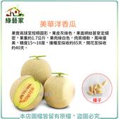 【綠藝家】大包裝I12.美華洋香瓜種子(哈密瓜)20顆