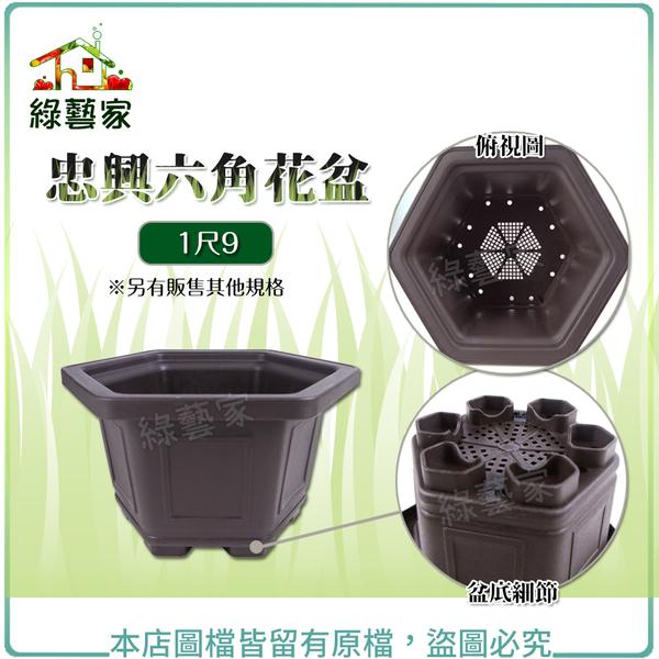 【綠藝家】忠興六角花盆 1尺9(加厚材質)
