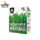汪喵-生菜栽培盒