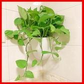 特賣花盆掛壁水培壁掛花盆 懶人綠蘿墻壁塑料 掛式墻上 掛墻 懸掛式掛花盆 LX