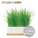 PurrFact 波菲特日式陶瓷貓草組_大方