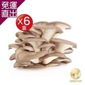 Global Fresh 特選秀珍菇 150g/盒,6盒/箱【免運直出】