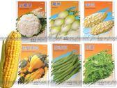 【EZ410】各種蔬菜種子: 玩具南瓜/紅甘藍/芹菜/彩色甜椒/韭菜/莧菜★EZGO商城★