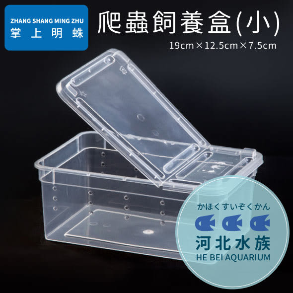 [ 河北水族 ] 掌上名蛛 【 爬蟲飼養盒 小 】 飼育盒 繁殖盒 兩棲 爬蟲 蜘蛛 青蛙 烏龜