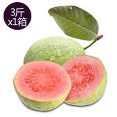 產銷履歷燕巢紅心芭樂3台斤(1箱/約3-5顆)