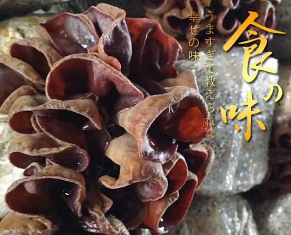 【鮮採家】溫室無毒新鮮黑木耳3入組(600g/包)