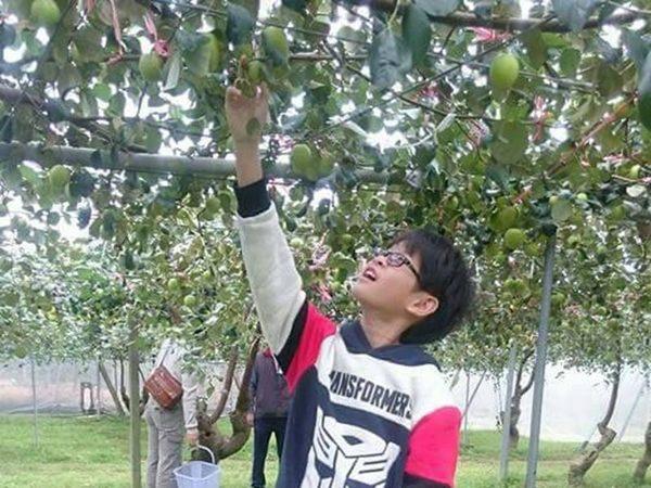 [台南]採果體驗-棗到了-梅嶺棗園休閒採果區〔1-3月蜜棗〕