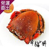 幸福小胖 超大旭蟹 1隻 500g ~ 600g/隻【免運直出】