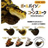 全套6款【日本正版】球蟒與玉米蛇 珠鍊吊飾 扭蛋 轉蛋 吊飾 Qualia - 370728