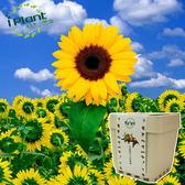 iPlant積木農場-向日葵/太陽葵