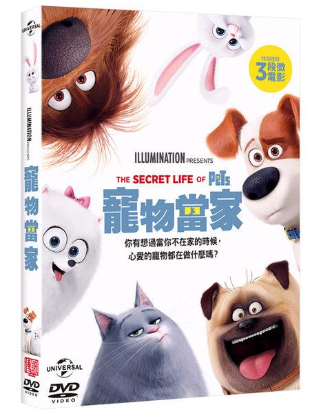 【停看聽音響唱片】【DVD】寵物當家