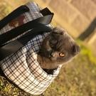 寵物背包狗狗便攜包手提單肩包貓包外出貓咪...