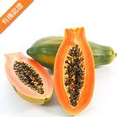 天賦農場・有機木瓜(6斤)