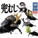 全套5款【日本正版】武士甲蟲 扭蛋 轉蛋 甲蟲頭盔 鍬形蟲 昆蟲模型 TAKARA TOMY - 888779