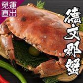 海鮮王 英國巨碩德文郡蟹*1隻組(800-900g±10%/隻)【免運直出】