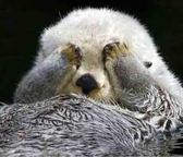 海獺測試-嘰嘰