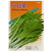 蔬菜種子-小白菜