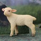 《MOJO FUN動物模型》動物星球頻道獨家授權 -小綿羊(站姿)
