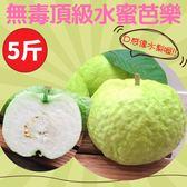 甜度高,果肉細膩像水梨般口感!!無毒頂級水蜜芭樂5斤(免運組)