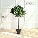 北歐創意室內裝飾花卉綠植盆栽大盆景橄欖樹...