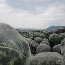 果樹果園防蟲網大棚楊梅櫻桃蓮霧桃樹羅幔藍莓防蟲防果蠅網罩網套 快速出貨