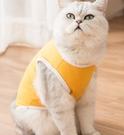 貓咪衣服小奶貓