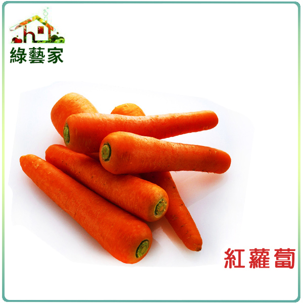 【綠藝家】C01.紅蘿蔔(胡蘿蔔)種子5.2克(約3000顆)