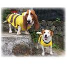 寵物雨衣 - 蜜蜂造型 - 大型毛寶 - 下雨照樣跑跳跳 ~