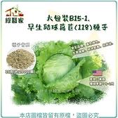 【綠藝家】大包裝B15-1.早生結球萵苣(118)種子35克(約29000顆)