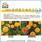【綠藝家00H04-1】H04.金峰萬壽菊種子1公斤