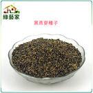 【綠藝家】J15.黑燕麥種子25克(燕麥...