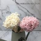 日本進口大地農園 30194小星花-乾燥...