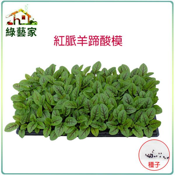 【綠藝家】大包裝K30.紅脈羊蹄酸模種子(紅脈酸模)1.5克(約1500顆)