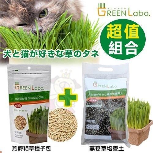 自己的貓草自己種《GreenLabo燕麥貓草種子包+培養土》組合賣場 一次備齊給貓主子