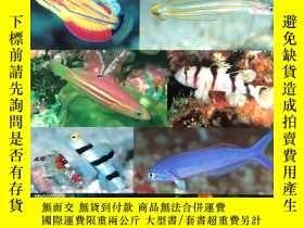 二手書博民逛書店Photo罕見Guide to Fishes of the Ma